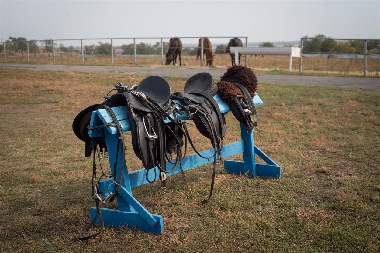 О лошадях заботятся владельцы фермы и волонтеры