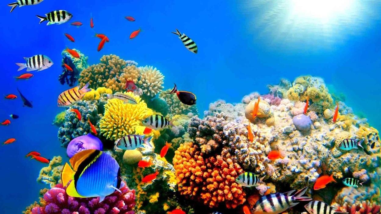 море с рыбами